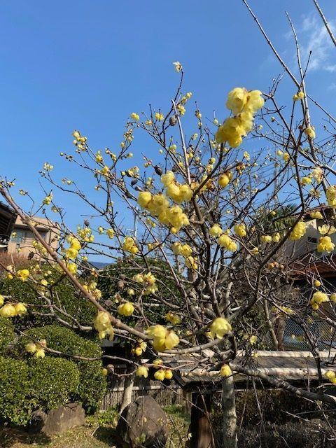 梅の花一輪♪